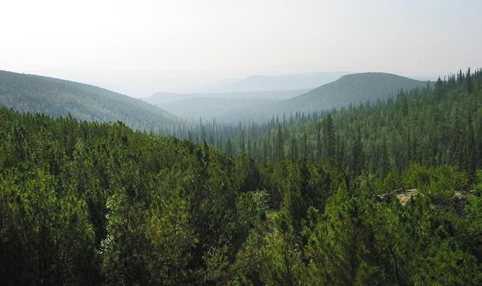 В Иркутской области создадут первый в России объект национального лесного наследия
